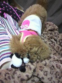 愛犬鈴ちゃんのライフスタイルブログ-2011041600090002.jpg