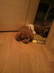 愛犬鈴ちゃんのライフスタイルブログ-2011041601410000.jpg