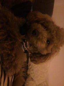愛犬鈴ちゃんのライフスタイルブログ-2011041720020002.jpg