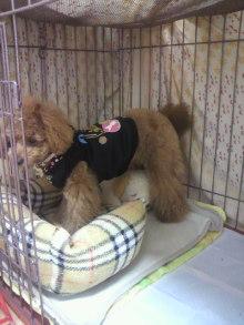 愛犬鈴ちゃんのライフスタイルブログ-2011041723460001.jpg