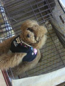 愛犬鈴ちゃんのライフスタイルブログ-2011041723460000.jpg