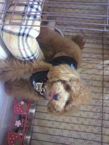 愛犬鈴ちゃんのライフスタイルブログ-2011041723470002.jpg
