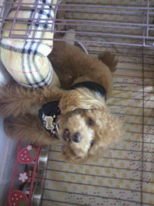 愛犬鈴ちゃんのライフスタイルブログ-2011041723470001.jpg