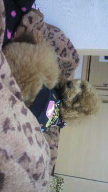 愛犬鈴ちゃんのライフスタイルブログ-2011041723560000.jpg