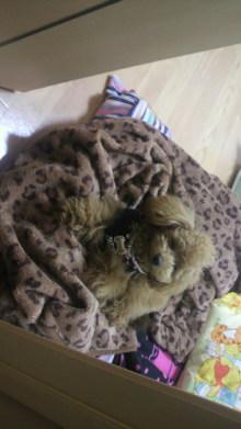 愛犬鈴ちゃんのライフスタイルブログ-2011041723580002.jpg