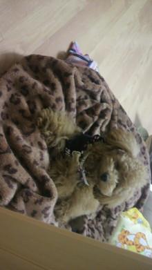 愛犬鈴ちゃんのライフスタイルブログ-2011041723580000.jpg