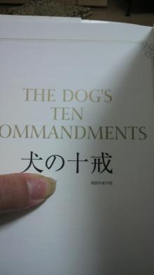 愛犬鈴ちゃんのライフスタイルブログ-2011041823540000.jpg