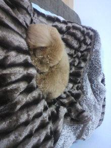 愛犬鈴ちゃんのライフスタイルブログ-2011042020510001.jpg