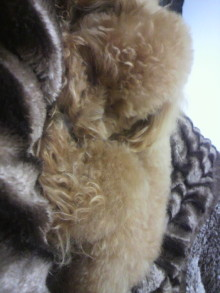 愛犬鈴ちゃんのライフスタイルブログ-2011042020510002.jpg