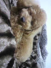 愛犬鈴ちゃんのライフスタイルブログ-2011042020510000.jpg