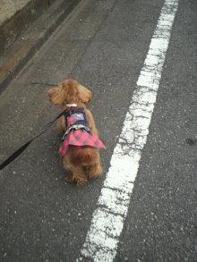 愛犬鈴ちゃんのライフスタイルブログ-2011042114460001.jpg