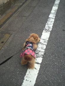 愛犬鈴ちゃんのライフスタイルブログ-2011042114460000.jpg