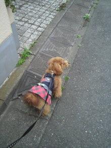 愛犬鈴ちゃんのライフスタイルブログ-2011042114450000.jpg