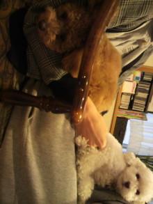 愛犬鈴ちゃんのライフスタイルブログ-2011042117460001.jpg
