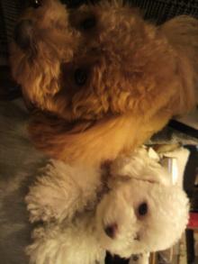 愛犬鈴ちゃんのライフスタイルブログ-2011042117500000.jpg