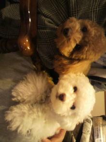 愛犬鈴ちゃんのライフスタイルブログ-2011042117500001.jpg