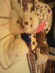 愛犬鈴ちゃんのライフスタイルブログ-2011042222140001.jpg