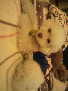 愛犬鈴ちゃんのライフスタイルブログ-2011042222150001.jpg