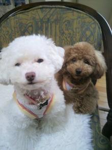 愛犬鈴ちゃんのライフスタイルブログ-2011042311040000.jpg