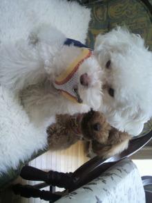 愛犬鈴ちゃんのライフスタイルブログ-2011042311050000.jpg