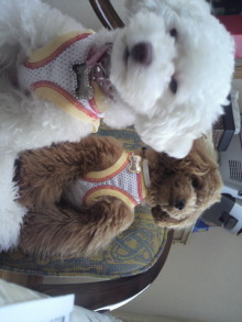 愛犬鈴ちゃんのライフスタイルブログ-2011042311050001.jpg