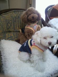愛犬鈴ちゃんのライフスタイルブログ-2011042311050002.jpg