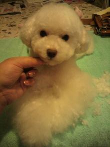 愛犬鈴ちゃんのライフスタイルブログ-2011042322440000.jpg