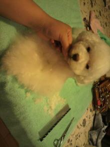 愛犬鈴ちゃんのライフスタイルブログ-2011042322440001.jpg
