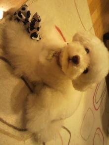 愛犬鈴ちゃんのライフスタイルブログ-2011042323210003.jpg