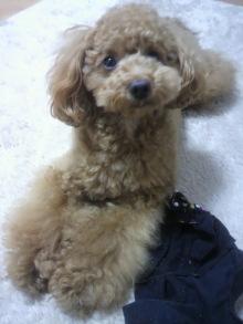 愛犬鈴ちゃんのライフスタイルブログ-2011042815420000.jpg