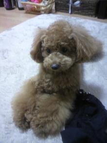 愛犬鈴ちゃんのライフスタイルブログ-2011042815420001.jpg