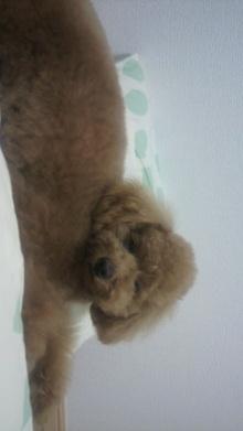 愛犬鈴ちゃんのライフスタイルブログ-2011042816580000.jpg