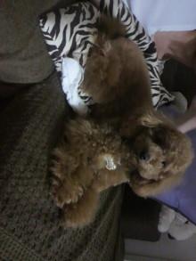 愛犬鈴ちゃんのライフスタイルブログ-2011042900070001.jpg