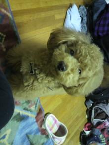 愛犬鈴ちゃんのライフスタイルブログ-2011043004410000.jpg