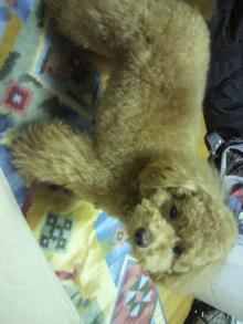 愛犬鈴ちゃんのライフスタイルブログ-2011043004420000.jpg