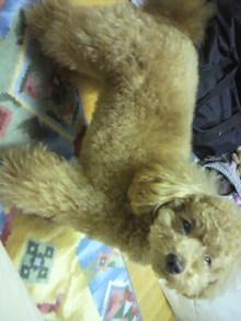 愛犬鈴ちゃんのライフスタイルブログ-2011043004420001.jpg