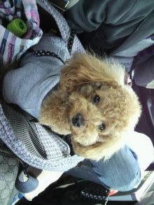 愛犬鈴ちゃんのライフスタイルブログ-2011043008180000.jpg