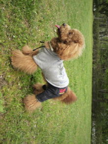 愛犬鈴ちゃんのライフスタイルブログ-2011043009500000.jpg