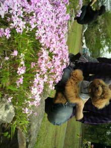 愛犬鈴ちゃんのライフスタイルブログ-2011043010100000.jpg