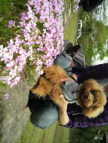 愛犬鈴ちゃんのライフスタイルブログ-2011043010100001.jpg