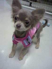 愛犬鈴ちゃんのライフスタイルブログ-2011031117400001.jpg