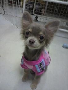 愛犬鈴ちゃんのライフスタイルブログ-2011031117410000.jpg