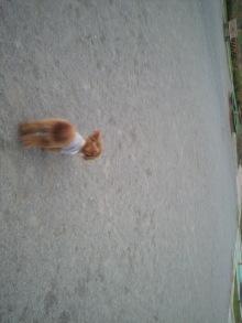 愛犬鈴ちゃんのライフスタイルブログ-2011050418110000.jpg