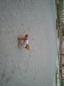 愛犬鈴ちゃんのライフスタイルブログ-2011050418110001.jpg