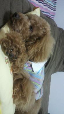 愛犬鈴ちゃんのライフスタイルブログ-2011050500360000.jpg