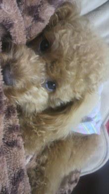 愛犬鈴ちゃんのライフスタイルブログ-2011050523100000.jpg