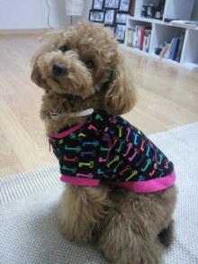愛犬トイプーの鈴ちゃん☆ライフスタイル-2011050612050001.jpg