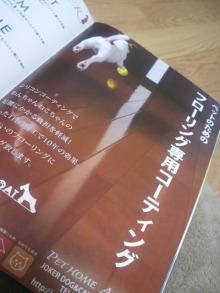 愛犬トイプーの鈴ちゃん☆ライフスタイル-2011050823560000.jpg