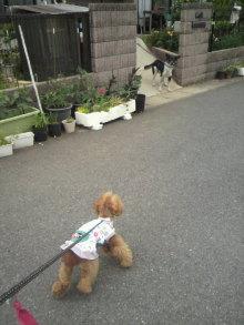 愛犬トイプーの鈴ちゃん☆ライフスタイル-2011051616130001.jpg
