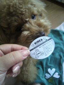 愛犬トイプーの鈴ちゃん☆ライフスタイル-2011051713220002.jpg